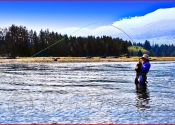 Blue on Blue, Fly-fishing for Salmon, Eve River  BC