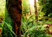 Trees Ferns and Light  24 x 41