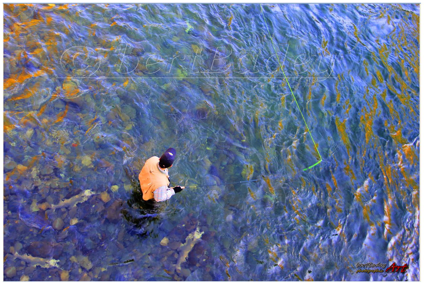 Blue and Gold Salmon on the Fly, Courtenay c