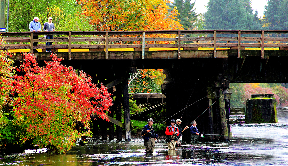 Groupof Anglers , Salmon on the River